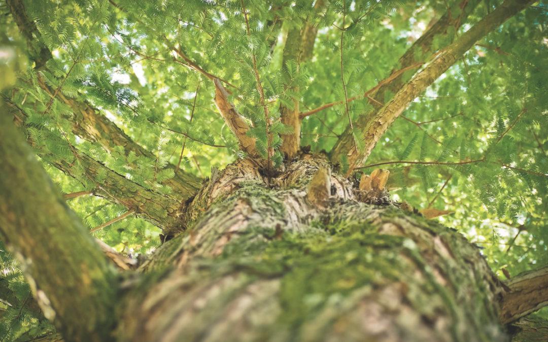 Arrière plan du site www.sarah-desmonen.com fond vert avec un arbre